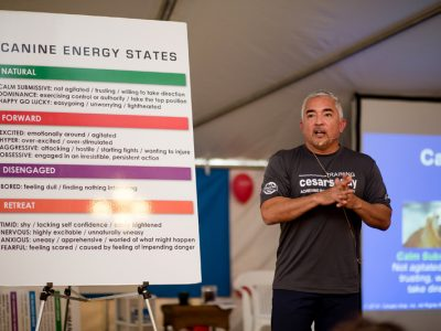 Cesar Milan giving a lecture on canine energy states
