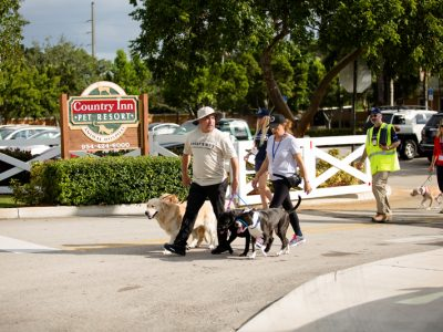Cesar Milan taking a walk with pet owners and their dogs and showing them how to walk their dogs properly