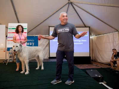 Cesar Milan giving a lecture about dogs with pet owner and her large white dog helping to demonstrate