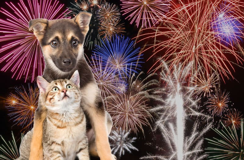 A scared german shepard puppy protecting a scared beige and tan kitten with fireworks going off in the background