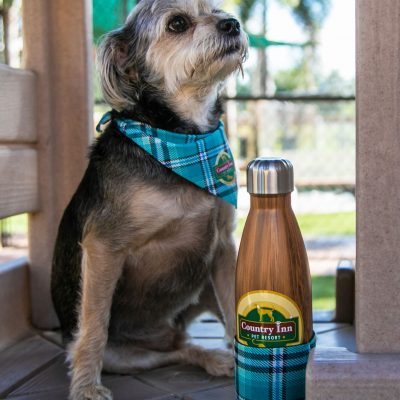 A small tan and black dog wearing a blue kerchief next to a country inn water bottle