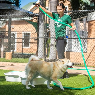 A team member playing with a dog and spraying them with the hose